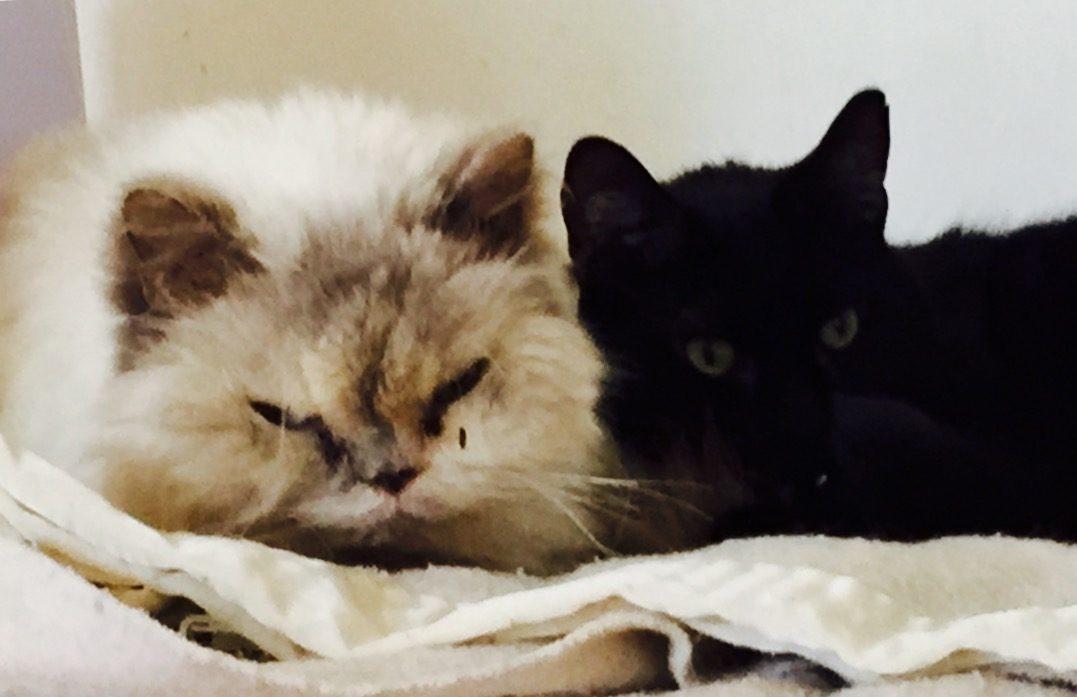 Nuemann and Jonson, house cats